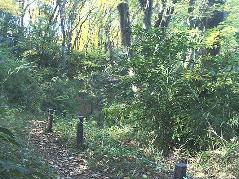 多摩区市民健康の森