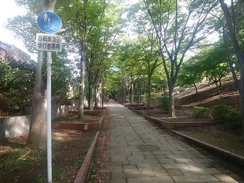 荏田南並木道