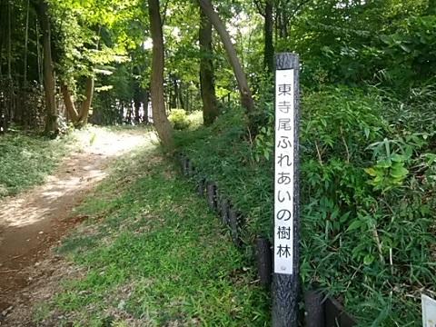 東寺尾ふれあい樹林