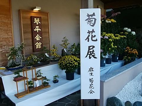 琴平神社菊花展