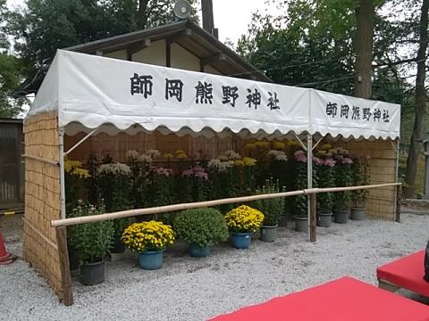 師岡熊野神社菊花展