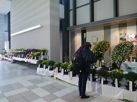 都筑菊花展