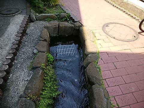 入江川せせらぎ緑道終点