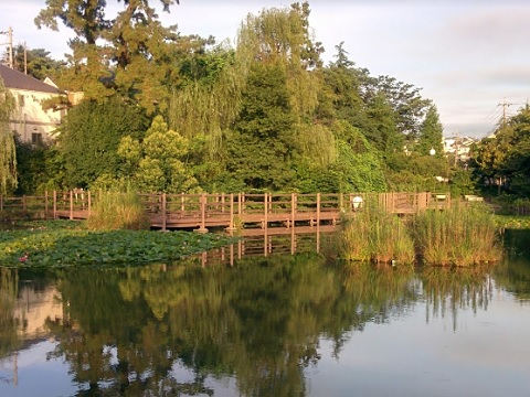 白幡池公園