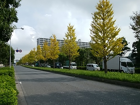 京町・平和公園イチョウ並木