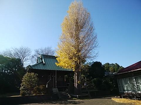 台村八幡神社イチョウ