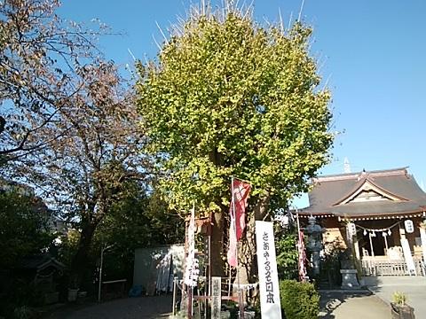 鶴見区日枝神社イチョウ
