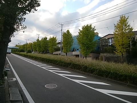 市ヶ尾高校のイチョウ並木