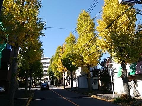 宮崎から宮前平駅のイチョウ並木