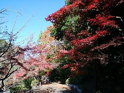 ささふねのみち紅葉