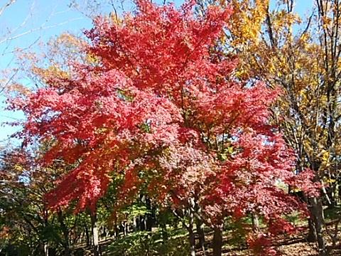 せきれいのみち紅葉