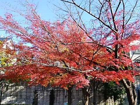ゆうばえのみち紅葉