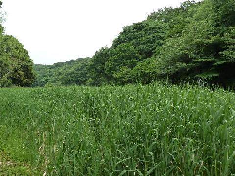 あし原湿原
