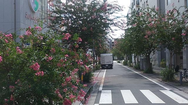 中川中央1丁目の百日紅並木