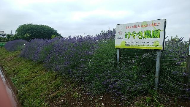 菅田・羽沢農業専用地区
