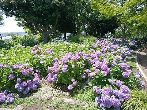 夢見 公園 動物 ヶ 川崎 崎