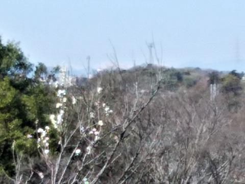 綱島市民の森桃の里広場南ア