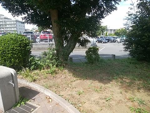 藤が丘第二公園三角点