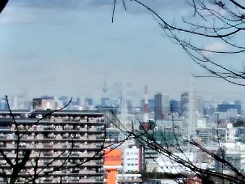 熊野神社市民の森権現山