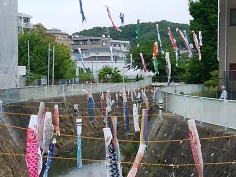 五反田川の鯉のぼり