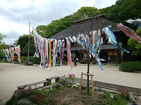 横溝屋敷の鯉のぼり